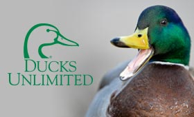 ducks unlimited case study group